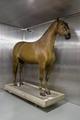 Uppstoppad häst. Hertig Fredrik Adolf - Livrustkammaren - 86954.tif