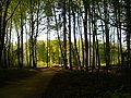 VG forest.jpg