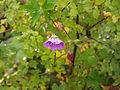 Valley of Flowers 34.JPG