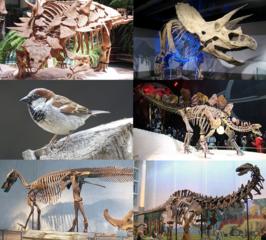 Vertegenwoordigers van belangrijke dinosauriërgroepen