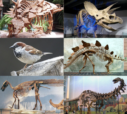 Various dinosaurs3