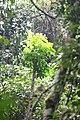 Vegetation Dja.JPG