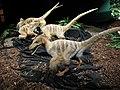 Velociraptor models.jpg