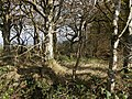 Villaton Plantation - geograph.org.uk - 608795.jpg