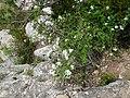 Vora el riu Glorieta a Mont-ral P1260718.jpg