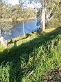 Wagga Wagga NSW 2650, Australia - panoramio.jpg