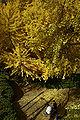 Wakayama Park02n4592.jpg