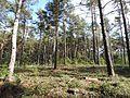 Waldgebiet rund um den Heegesee - panoramio.jpg
