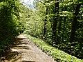 Waldweg - panoramio (48).jpg