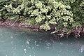 Walk along the Thiou river @ Annecy (35476943702).jpg