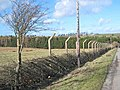 Wartime fence near Greenfield Farm - geograph.org.uk - 357626.jpg
