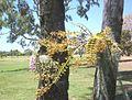 Was beside No 13 Green September 2007. - panoramio.jpg