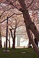 Washington Monument reflection - 2013-04-09 (8634835323).jpg