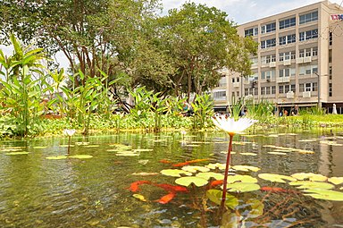 Water lilies and fish in Rabin Square eco pool