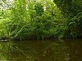 Water of Leith; June 15, 2014 01.jpg