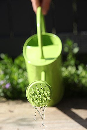 Watering can - A green, 2 litre watering can made of galvanised iron pouring water.