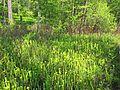 Watson Rare Native Plant Preserve, Warren, Texas.jpg