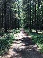 Way through the Woods.jpg