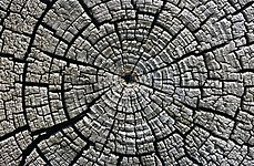 Weathered growth rings at Aztec Ruins National Monument.jpg