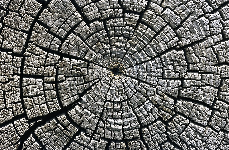 File:Weathered growth rings at Aztec Ruins National Monument.jpg