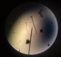 Weird microorganism.png