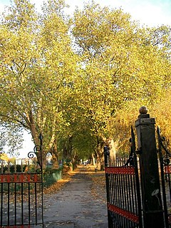 Western gate to Plashet Park with plane trees - geograph.org.uk - 289695.jpg