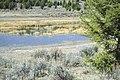 Wetlands37 (39076588841).jpg
