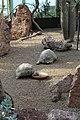 Wien-Schönbrunn, Wüstenhaus, Strahlenschildkröten.JPG