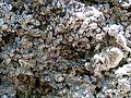WikiProjekt Landstreicher Wasserfall Hinang 07.jpg