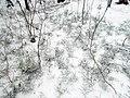 Winter in Elektrostal. 2020 year. img 034.jpg