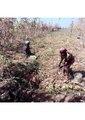 Women workforce in agriclture.pdf
