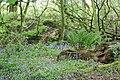 Wood close to Pex Hill near Rainhill and Cronton - geograph.org.uk - 291329.jpg