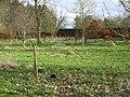 Woodland, Purves Hall - geograph.org.uk - 351999.jpg