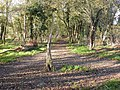 Woodland Path - geograph.org.uk - 277476.jpg