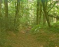 Woodland walk - geograph.org.uk - 35004.jpg