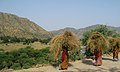 Working women in rajasthan countryside india.jpg