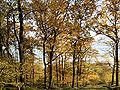 XN Autumn Beech Forest 508.jpg