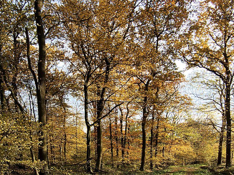 File:XN Autumn Beech Forest 508.jpg