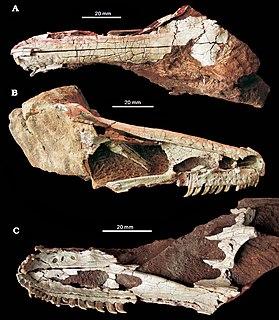 <i>Xixiasaurus</i> Genus of dinosaur