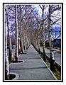 Yadbood pathway.jpg
