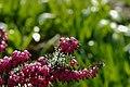 Záhřeb, botanická zahrada, květina.jpg