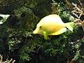 Zoo Wuppertal 2007-04-30 (000110).jpg