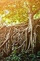 (Khao Luang) Ramkhamhaeng National Park 01.jpg