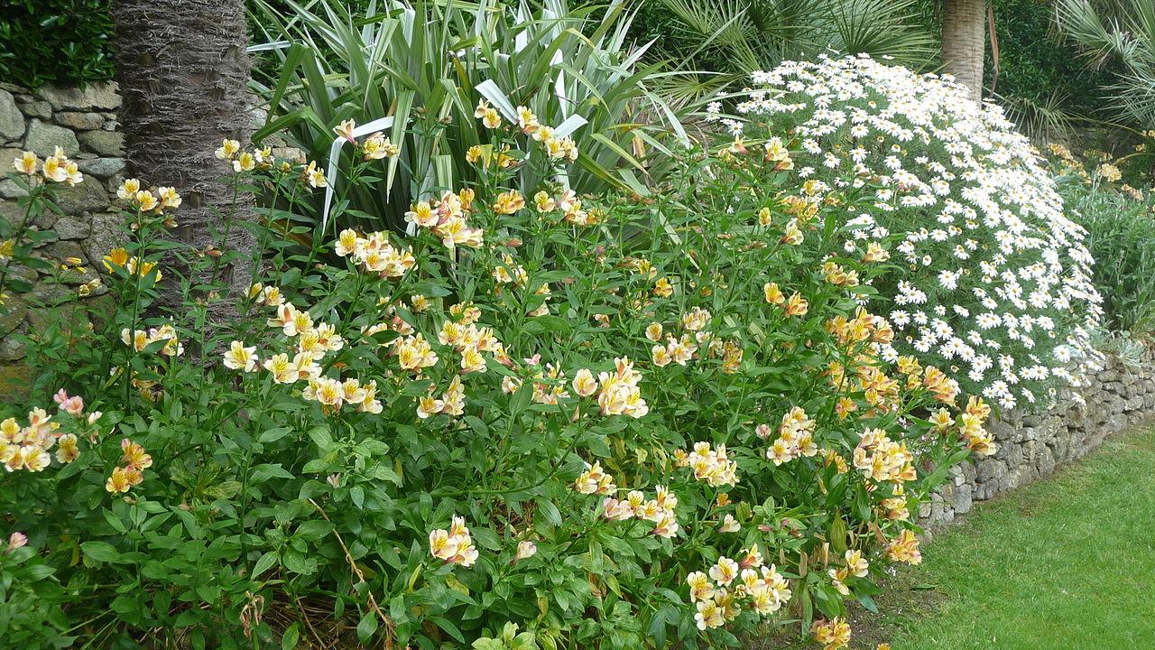 File le de batz 048 jardin georges delaselle jpg for Jardin georges delaselle