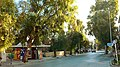 Οδός Ελευθερίου Βενιζέλου Παλλήνης.jpg