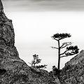 І на камінні ростуть дерева.jpg