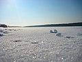 Белый снег - panoramio.jpg
