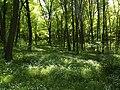 Голосіївський лісопарк 4.JPG