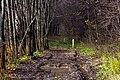 Дорога осенью - panoramio (1).jpg
