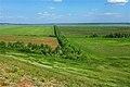 Лесополоса в восточном направлении - panoramio.jpg